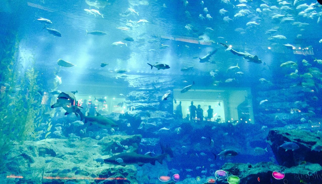 Aquarium du Mall - Voyage à Dubaï